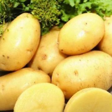 Подарок селекционеров — картофель «сказка»: описание сорта, характеристика, фото