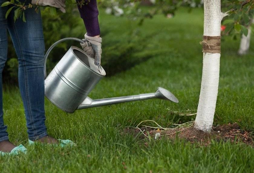 Описание и характеристики сорта вишни вита и его плодоношения, правила выращивания и уход