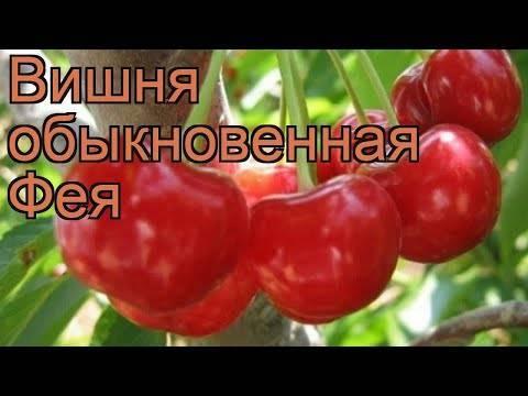 Сорта вишни: названия, описание и характеристики