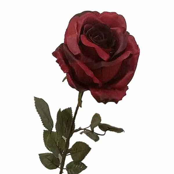 Эффектная черная роза – как получить необходимый оттенок?