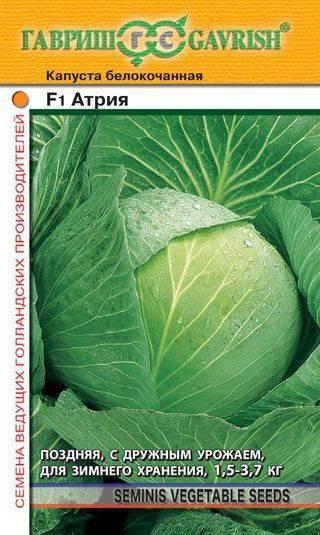 Лучшие сорта ранней капусты по отзывам огородников и правила получения хорошего урожая