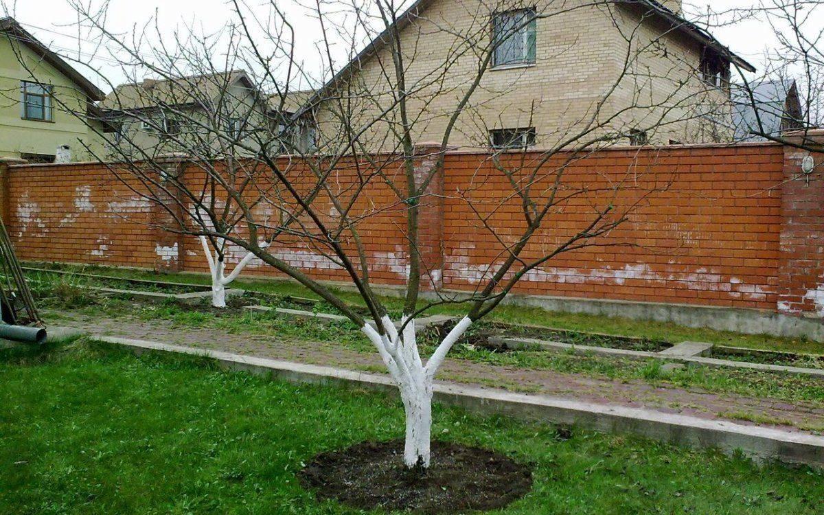 Осенняя подкормка плодовых деревьев и кустарников: сроки для молодых и взрослых растений