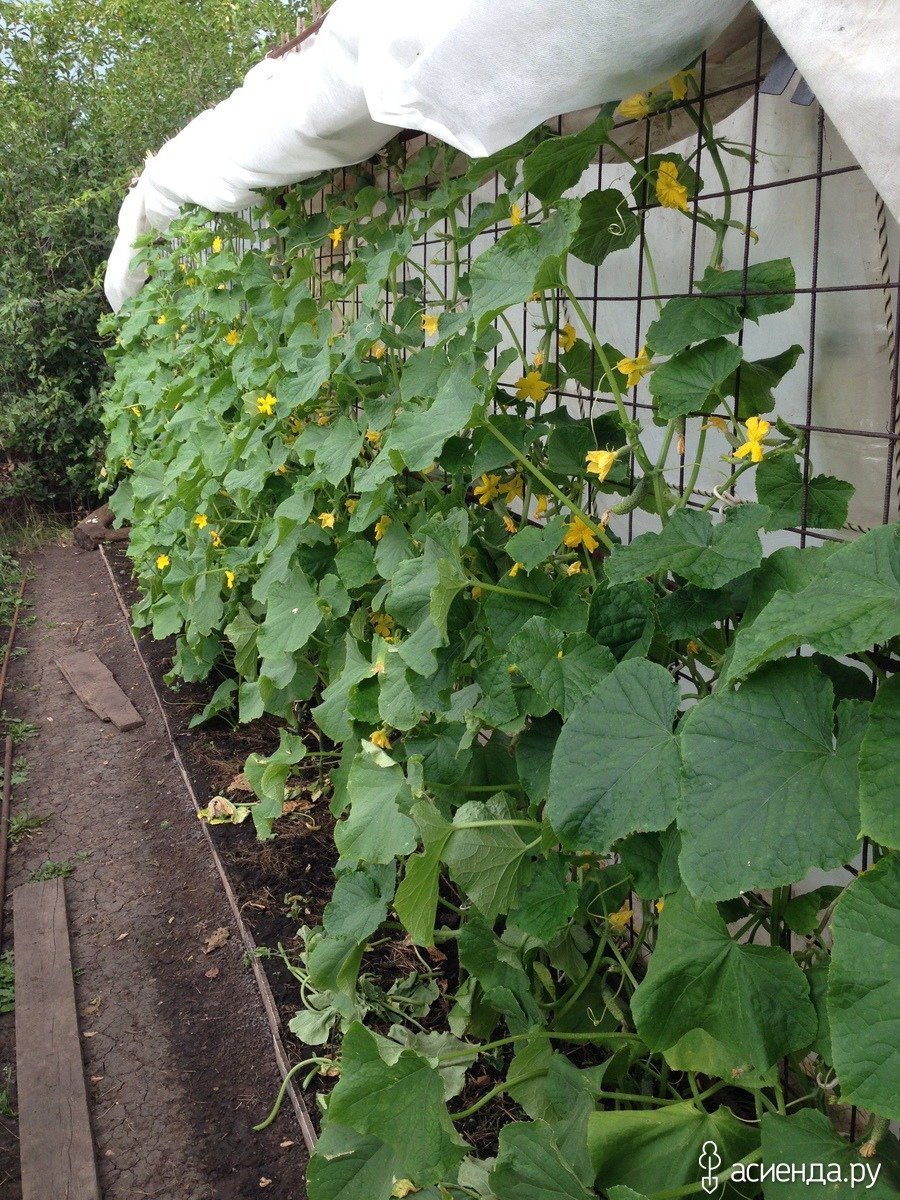 14 съедобных многолетних культур, которые можно вырастить в своем огороде