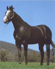 Список пород лошадей