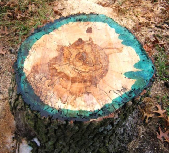 Чем полить дерево, чтобы оно быстро засохло с фото и видео