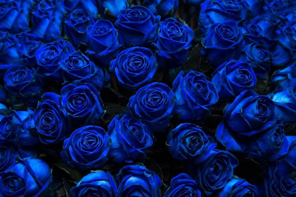 Какого цвета бывают розы? описание и фото цветов разных оттенков