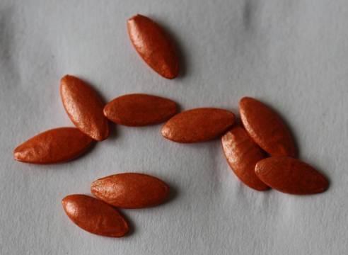 Подготовка семян огурцов к посеву на рассаду: как правильно подготовить посевной материал, надо ли замачивать и проращивать перед посадкой