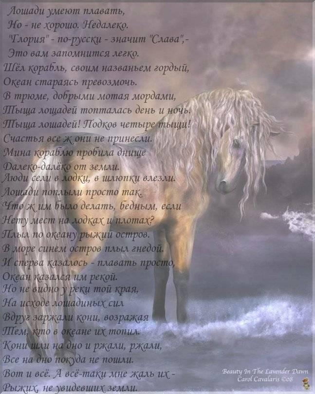 Плавать с лошадью