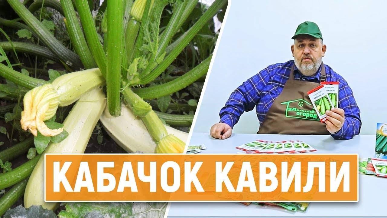 Описание кабачка «кавили f1»: фото, отзывы садоводов