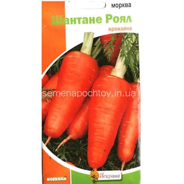 Морковь болтекс: характеристика и описание сорта, отличие от других видов, агротехника выращивания, болезни и вредители