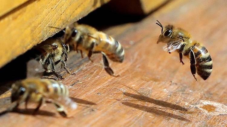 Осы под крышей — избавится от насекомых быстро