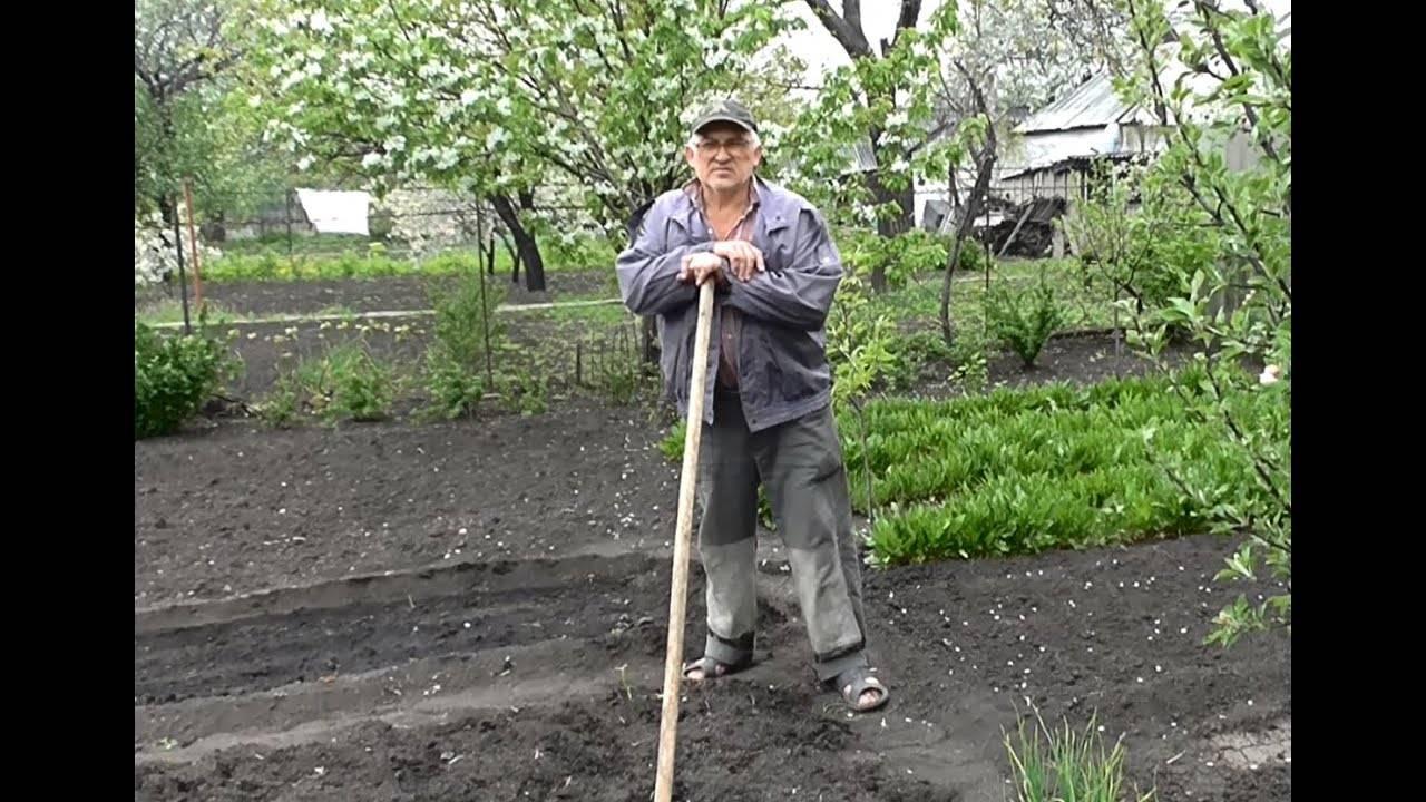 Фасоль - посадка и уход в открытом грунте, правила выращивания