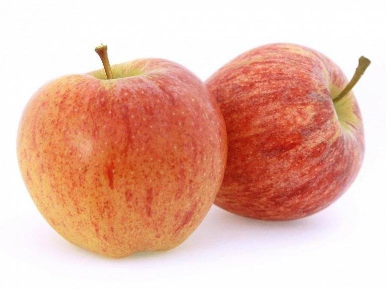 Яблоня гала и гала маст