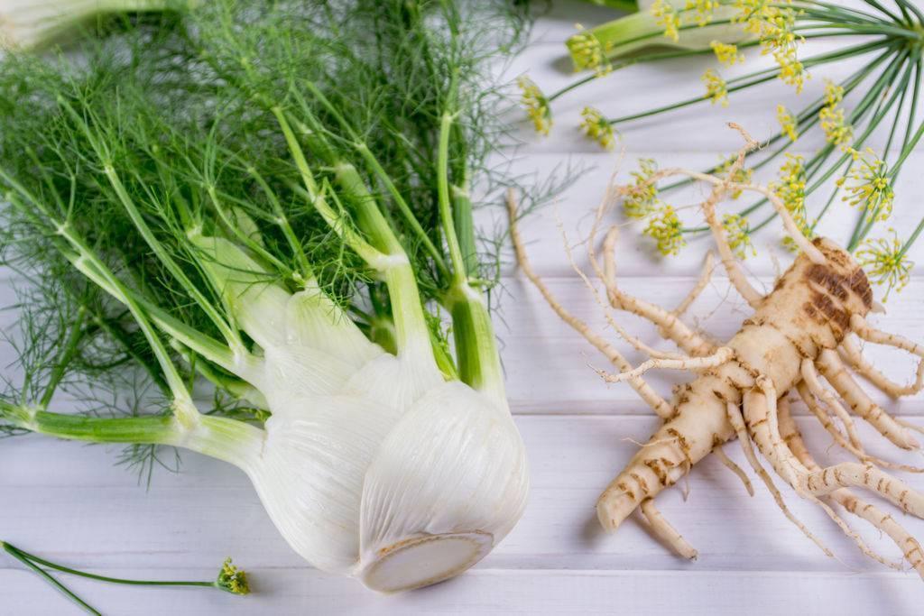 Полезные свойства травы фенхель: возможность забыть о простуде и кашле