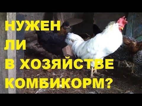 Выгодно ли держать кур для продажи яиц - подробно об условиях содержания и рентабельности!