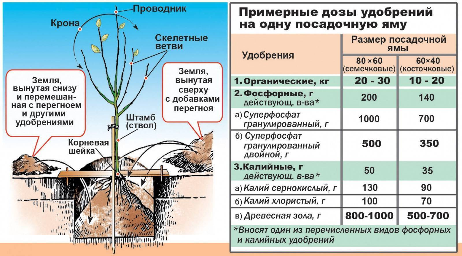 Правила весенней посадки и ухода за саженцами плодовых деревьев