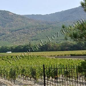 Чем обработать виноград весной после открытия - самые эффективные средства