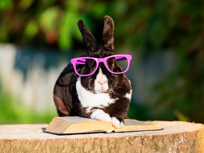 Кролик стучит задними лапами (видео)