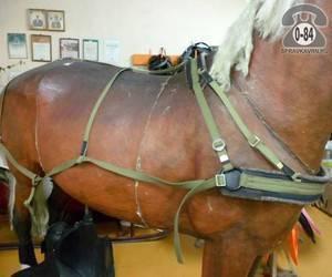 Все о сбруе для лошадей: особенности и основные предметы упряжи для лошади