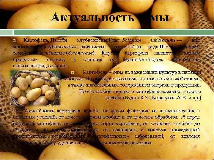 Картофель свитанок киевский. картофель рассыпчатый свитанок киевский