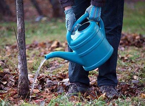 Система орошения сада: полив саженцев плодовых деревьев и как поливать взрослые культуры