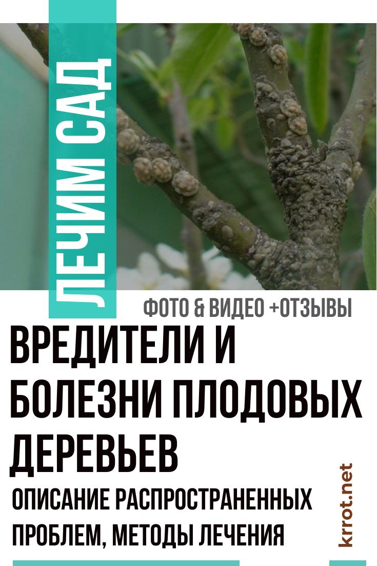Болезни и вредители плодовых деревьев: фото и видео болезней косточковых культур