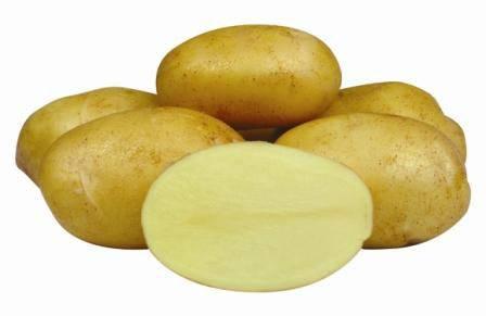 Картофель сказка: описание сорта, характеристика, фото