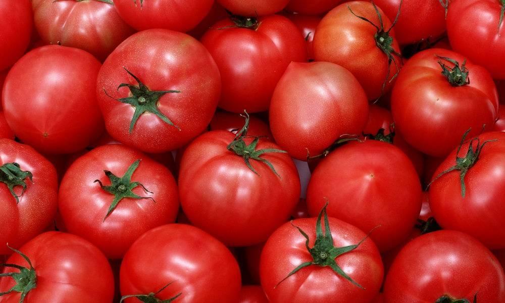 Чем подкормить рассаду помидоров? как правильно высаживать рассаду в теплицу? как выращивать рассаду, использовать гидрогель и укрывать растения
