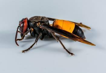 Как пчелиный яд применяется в виде лекарства