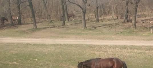 Обучение лошади - horse training - qwe.wiki