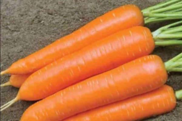 Посадка моркови: сроки и пошаговые инструкции