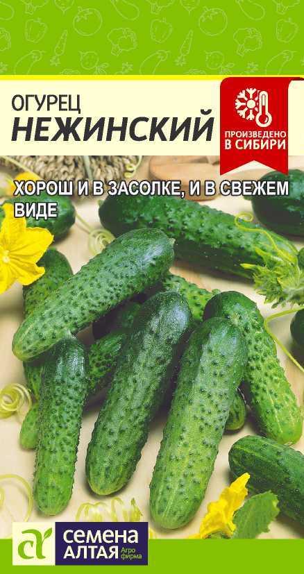 Огурец нежинский: описание и характеристика, отзывы