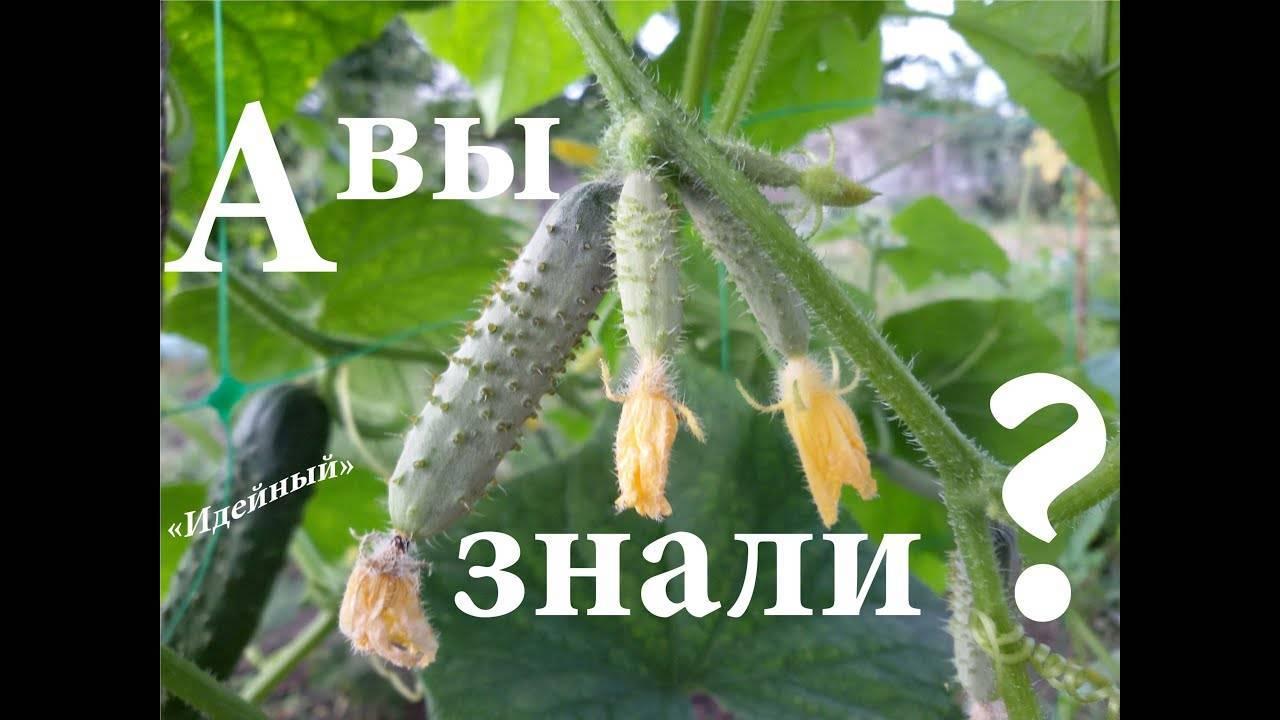 Подкормка дрожжами томатов и огурцов: рецепт и правила применения, отзывы - общая информация - 2020