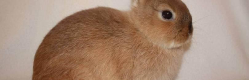 Как правильно подстричь когти собаке в домашних условиях?