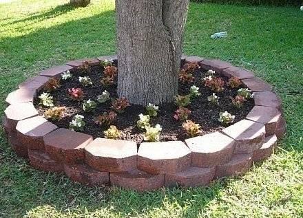 С какими растениями можно рядом сажать вишню