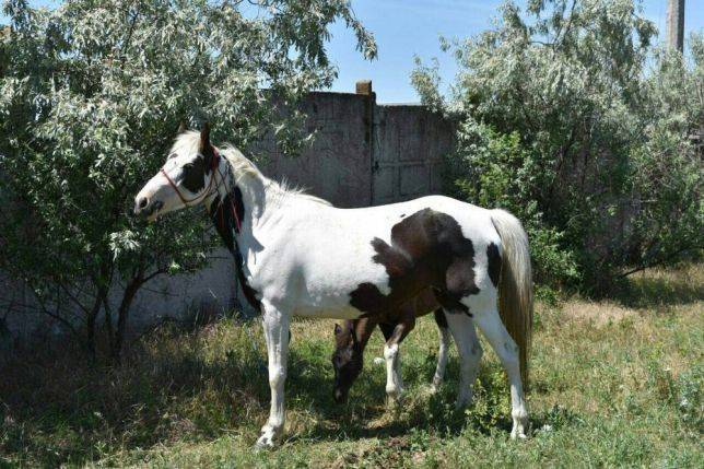 Чем мерин отличается от коня