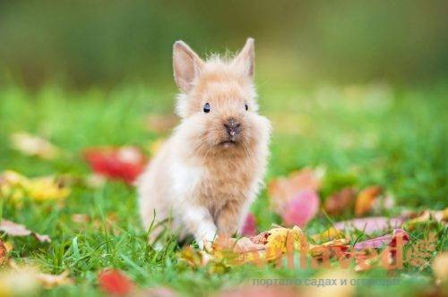 Купание декоративных кроликов: за и против