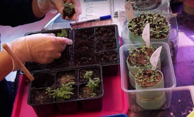 Выращивание астильбы – посадка и уход в открытом грунте