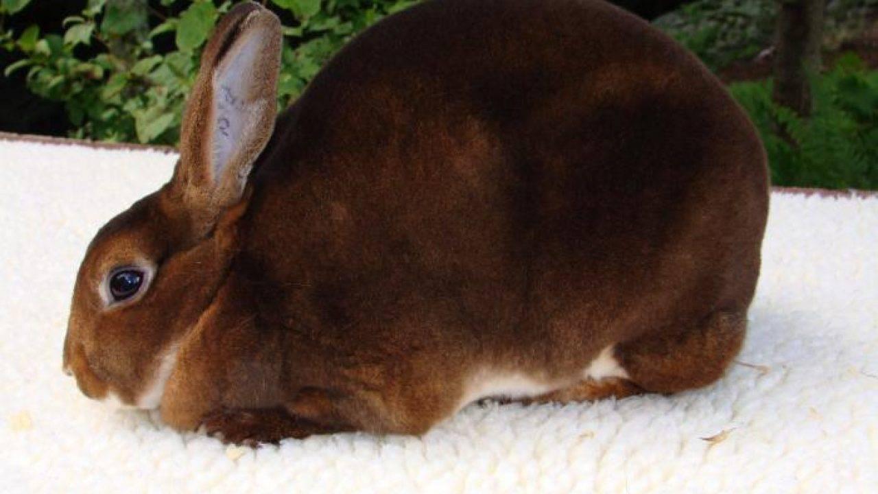 Чем кормить маленьких крольчат?