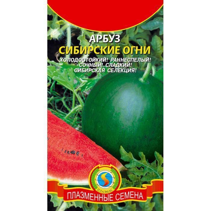 Как посадить и вырастить арбуз в сибири?