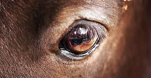 Мир глазами животных