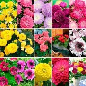 Однолетние цветы для дачи, многообразие видов - фото примеров