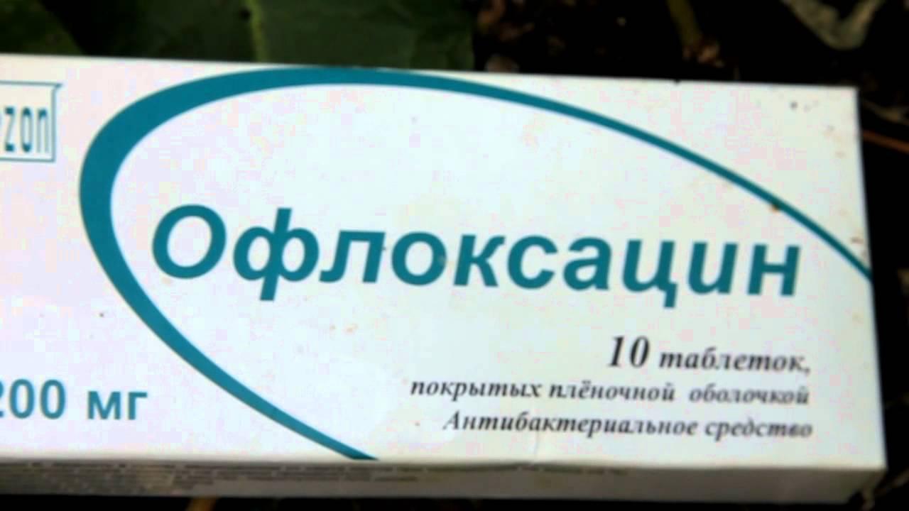 Лечение от бактериального ожога груши. симптомы и лечение бактериального ожога