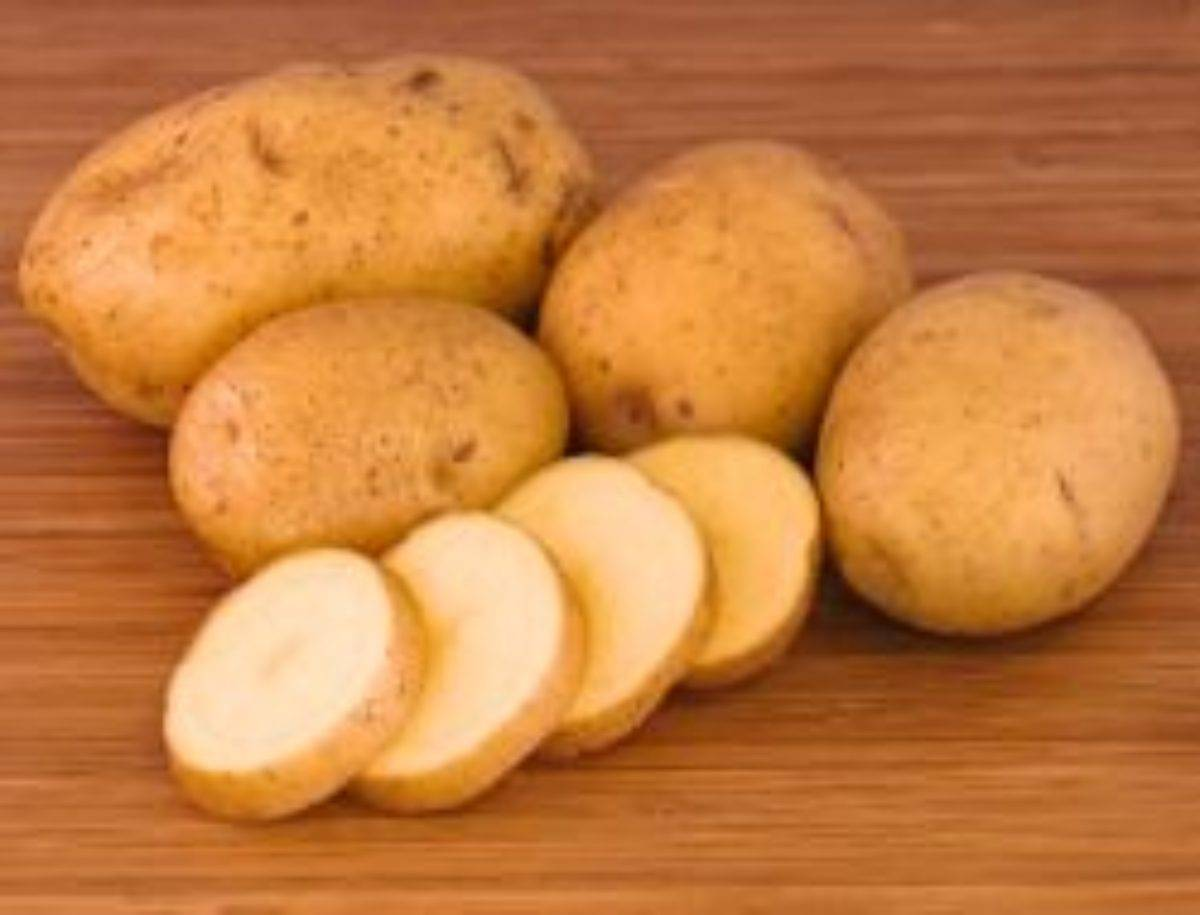 Картофель рокко описание сорта, характеристика, фото