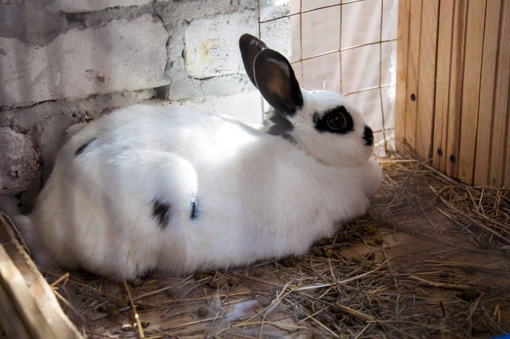 Окрол у кроликов: правила проведения летом и зимой