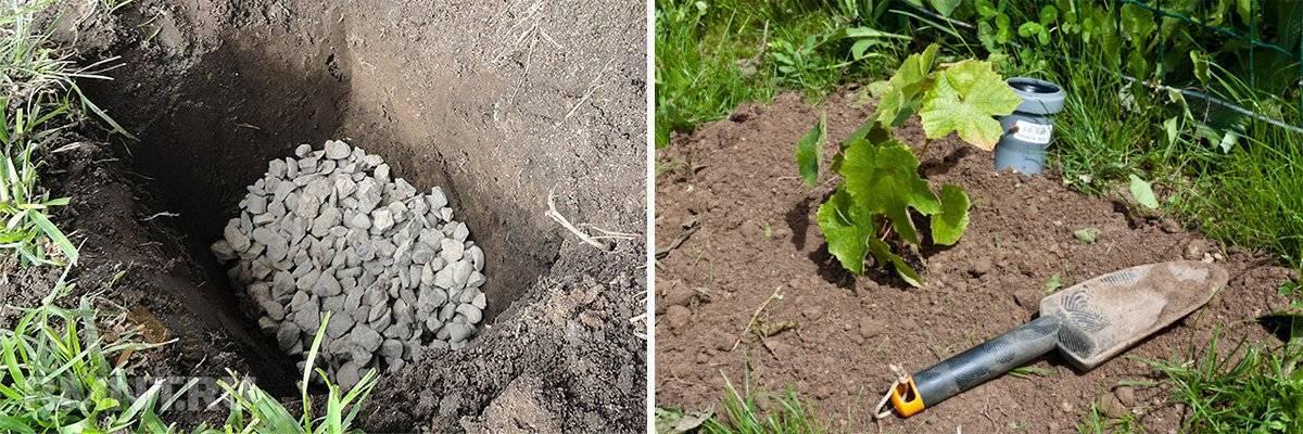 Совместимость растений в саду и огороде. совместимость растений - хорошее соседство в саду и огороде.