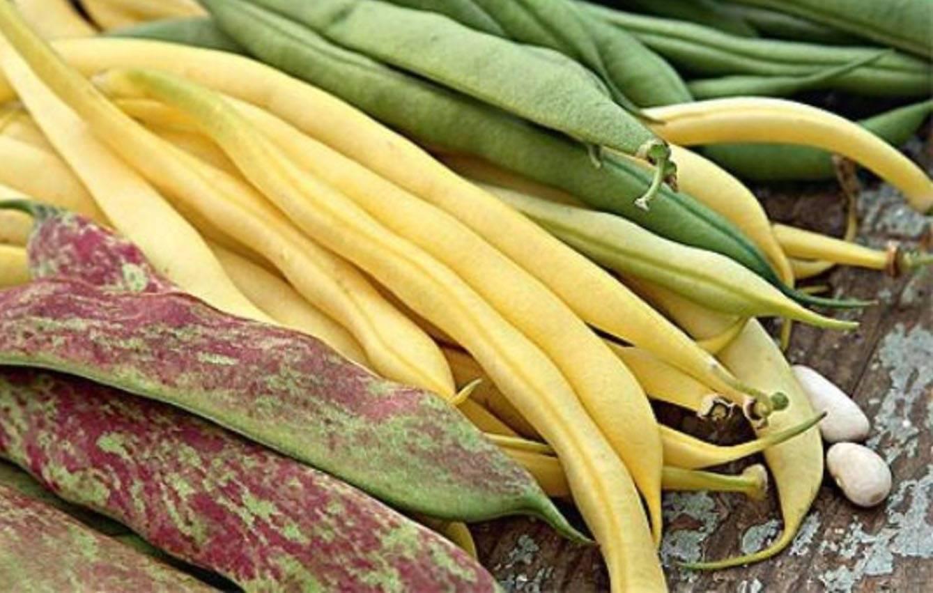 Как правильно вырастить фасоль в открытом грунте: сорта, посадка и уход