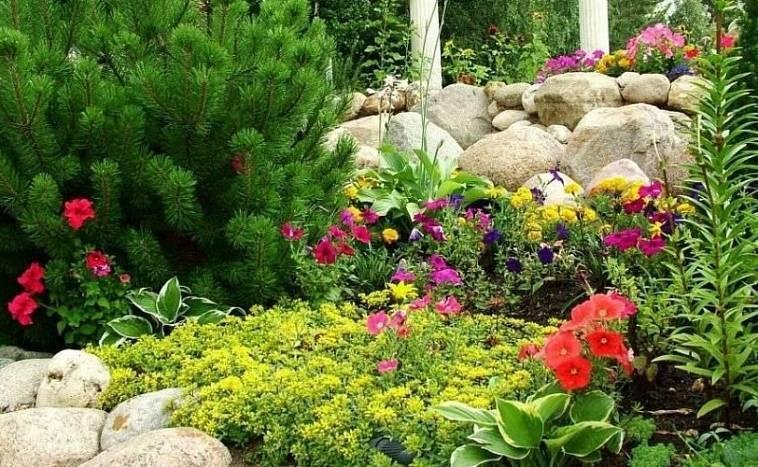 Миксбордер из хвойных и кустарников: как выбрать растения, посадка и уход