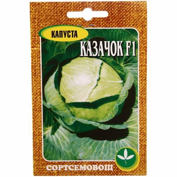 Савойская капуста: выращивание в открытом грунте, посадка и уход