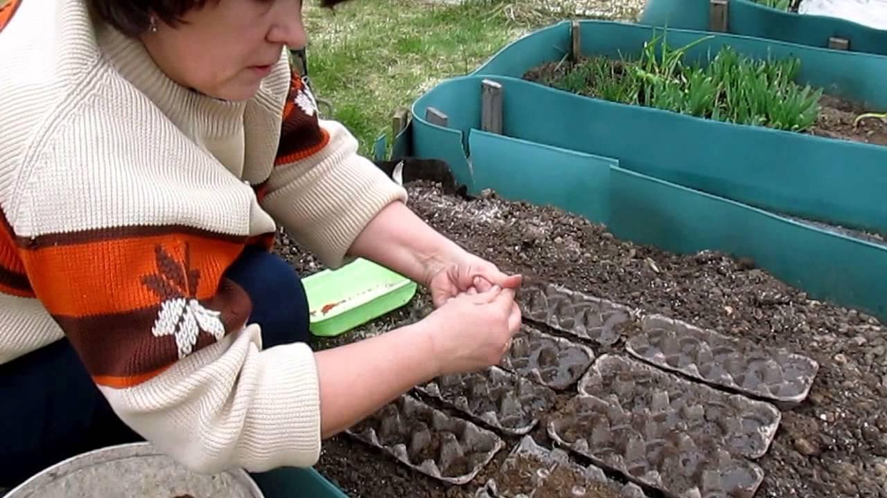 Как и когда посадить редис в открытый грунт весной